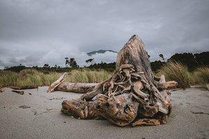 Driftwood on Beach Landscape