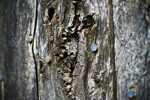 Old Fence Wood
