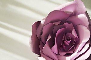 ultraviolet paper flowers