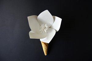 Beautiful paper flower in ice cream