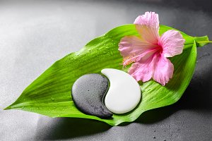 pink hibiscus flower and Yin-Yang