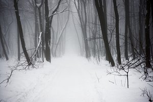 mysterious winter snowy forest