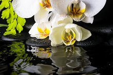 Spa still life of white orchid  by  in Health