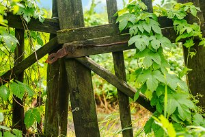 closed old rural gate with hop