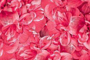 A background of a geranium