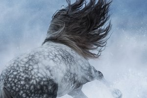 Horse galloping during blizzard