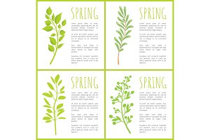 Spring Herbal Plants Posters with Sample Texts