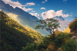 Tree against amazing Himalayan mountains at sunset