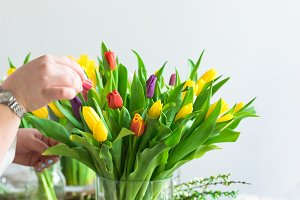 Arranging multicolored tulips