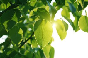 sunlight on green leaves