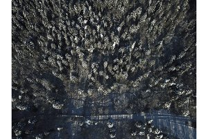 Aerial, Drone View of Snow Covered Evergreen Christmas Tree Forest after Snow