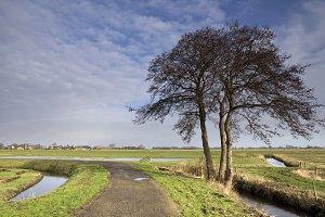 Solitary tree along a bike path