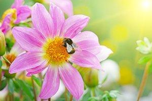 Big bumblebee