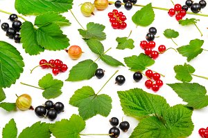 Black and red currants, gooseberries