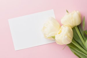 Tulip and blank greeting card