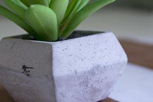 Mini Succulent On Wooden Board