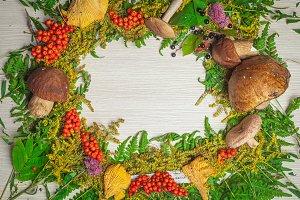 Beautiful frame of  mushrooms