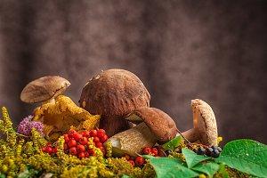 A still-life from natural mushrooms