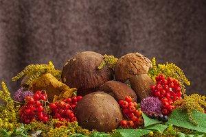 A still-life from mushrooms