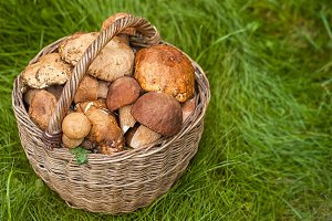 A basket with mushrooms
