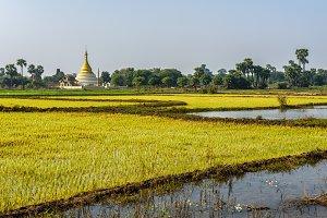 Rice fields and a stupa near Mandalay, Myanmar