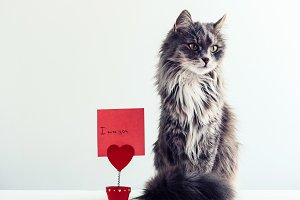Charming, furry cat