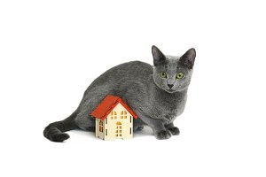 Cat and small wooden house isolated
