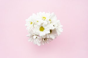 Bunch of white chamomile