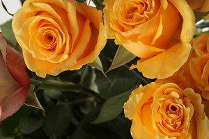 Yellow roses flower.