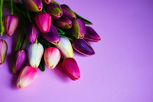 Spring concept with tulips