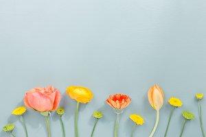 Tender spring flowers in row