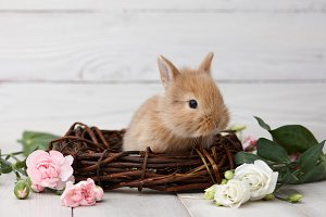 Easter bunny with flowers and nest