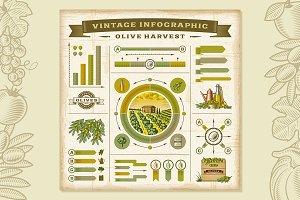 Olive Harvest Infographic Set