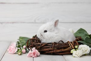 Easter bunny with flowers on white p