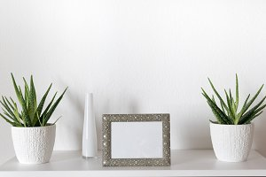 Picture frame with plants