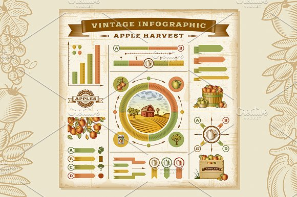 Apple Harvest Infographic Set