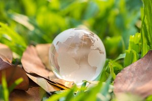 glass globe on dry leaf and green gr