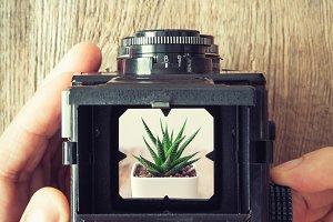 Photographer shooting succulent.