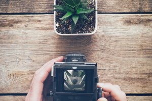 Man takes photo of succulent.
