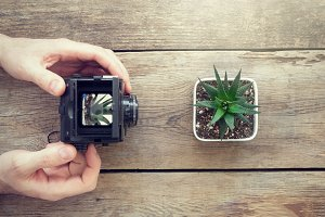 Man taking picture of succulent