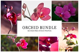 Orchid Flower Stock Bundle