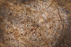 A tree in a cut