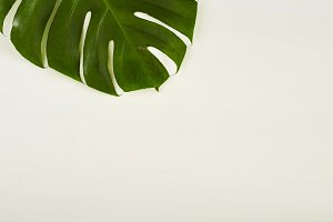 Monstera green leaves frame