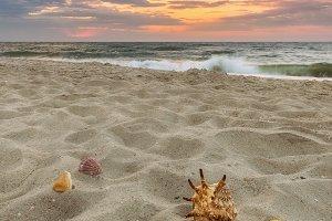 Shells on sea sand