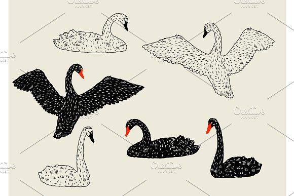 Set Of Black And White Swans Hand Drawn Birds