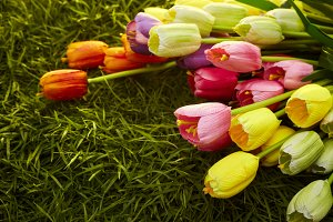 Colorful tulips on green grass