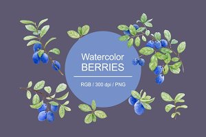 Watercolor berries.