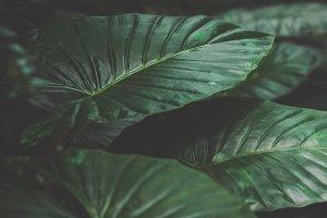 Dark Tropical Leaves