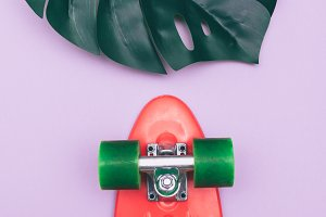 skateboard and palm