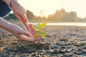 Human hands planting plant